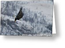 Bald Eagle In Flight-signed-#4016 Greeting Card