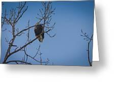 Bald Eagle In Tree Greeting Card