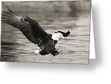 Bald Eagle Landing Greeting Card