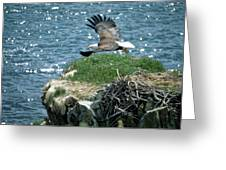 Bald Eagle Leaves Nest Greeting Card