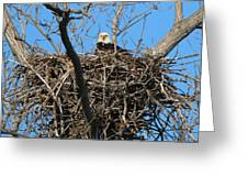 Bald Eagle Lookout  3661 Greeting Card