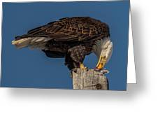 Bald Eagle Lunch Greeting Card