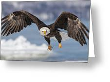 Bald Eagle Magic Greeting Card
