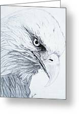 Bald Eagle Greeting Card by Nancy Rucker