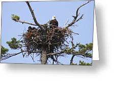 Bald Eagle Nest Greeting Card