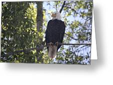 Bald Eagle Nw1968 Greeting Card