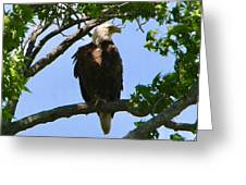 Bald Eagle On Watch Greeting Card