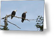 Bald Eagle Perch Greeting Card