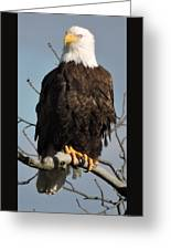 Bald Eagle Perched On Branch On A Windy Day Greeting Card