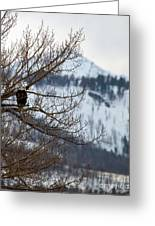 Bald Eagle Perched-signed-#4008 Greeting Card