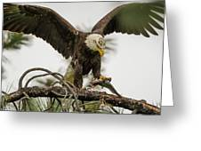 Bald Eagle Picking Up Fish Greeting Card