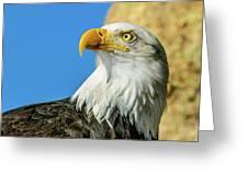 Bald Eagle Profile 4 Greeting Card