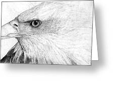 Bald Eagle Profile Greeting Card