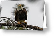 Bald Eagle Protecting His Fish Greeting Card