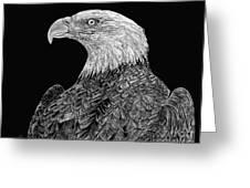 Bald Eagle Scratchboard Greeting Card