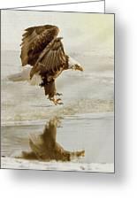 Bald Eagle Series #1 - Eagle Is Landing Greeting Card