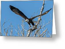 Bald Eagle Shows Its Focus Greeting Card