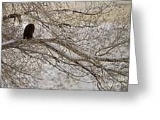 Bald Eagle-signed-#4879 Greeting Card