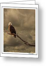Bald Eagle Storm Greeting Card