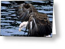 Bald Eagle Strikes Greeting Card