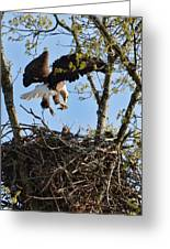 Bald Eagle Taking Fish To Nest 031520169678 Greeting Card