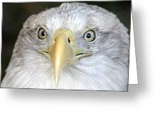 Bald Eagle Up Close Greeting Card