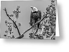 Bald Eagle Warning In Black And White Greeting Card