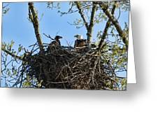 Bald Eagle With Chick In Nest 031520169849 Greeting Card