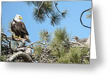 Bald Eagle With Nestling Greeting Card