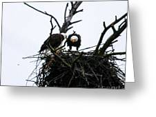 Bald Eagles Along The Delaware River Greeting Card