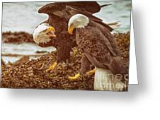 Bald Eagles Family Discussion Greeting Card