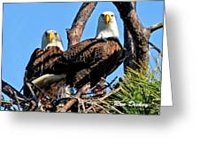 Bald Eagles In Nest Greeting Card