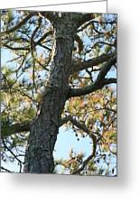 Bald Head Tree Greeting Card