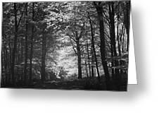 Baldringe Meadows Greeting Card