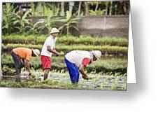 Bali Farming Greeting Card