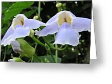 Bali Flowers 3 Greeting Card