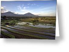 Bali Terrace Rice Field Greeting Card