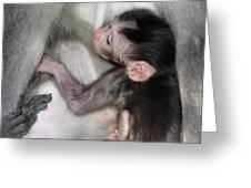 Balinese Baby Monkey Feeding Greeting Card