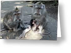 Balinese Monkey Family Greeting Card