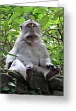 Balinese Serious Monkey Greeting Card