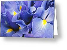 Ballet Of The Petals Greeting Card