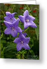 Balloon Flowers Greeting Card