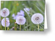 Balls Of Seed Greeting Card