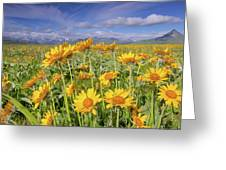 Balsam On The Rocky Mountain Front Greeting Card