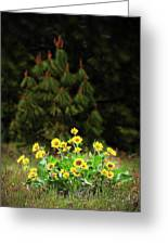 Balsamroot And Evergreen Greeting Card