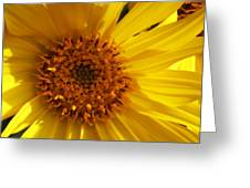 Balsamroot Flower Greeting Card