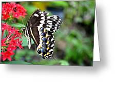 Baltimore Checker Spot Butterfly Greeting Card