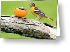 Baltimore Oriole Having Breakfast This Morning Greeting Card
