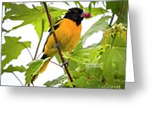 Baltimore Oriole With Raspberry  Greeting Card