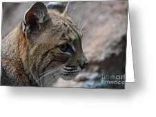 Bama Bobcat Greeting Card